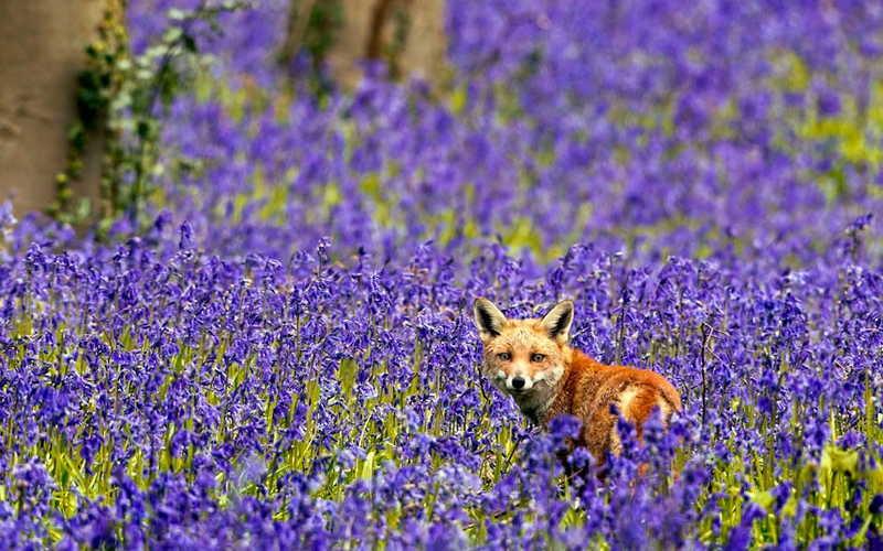 Животные весной картинки для детей